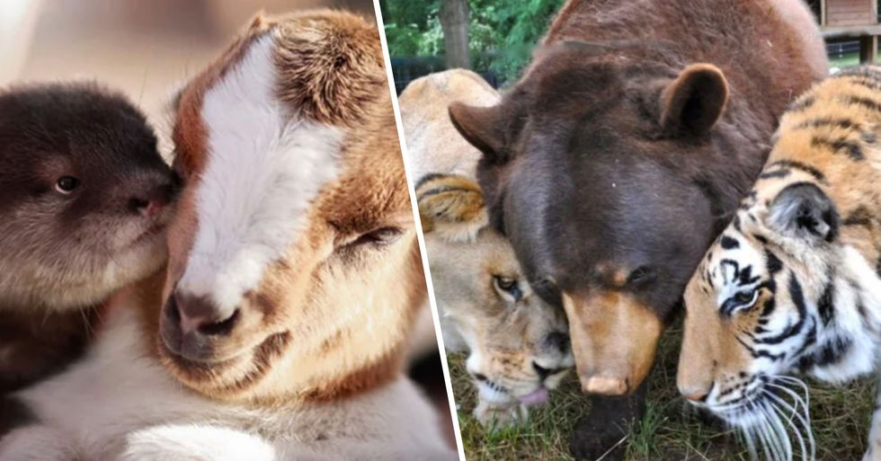 These Unusual Animal Friendships Are Adorable