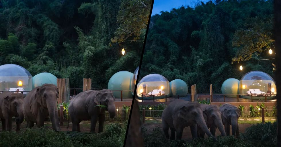 You Can Now Sleep in a See-Through 'Jungle Bubble' in Thailand Surrounded by Rescue Elephants
