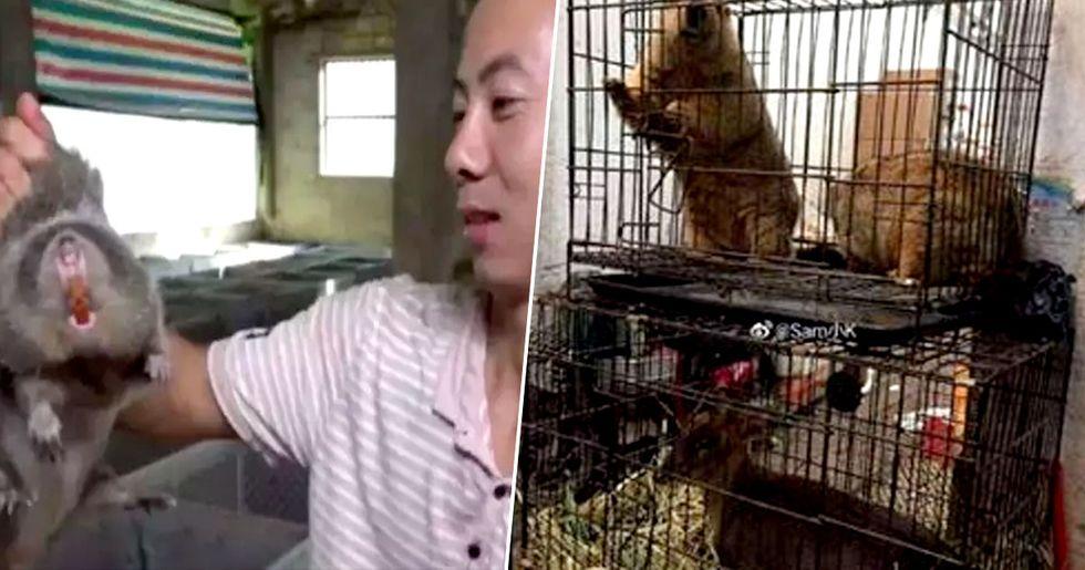 Terrifying Look Inside Live Animal Market Where Coronavirus Allegedly Started