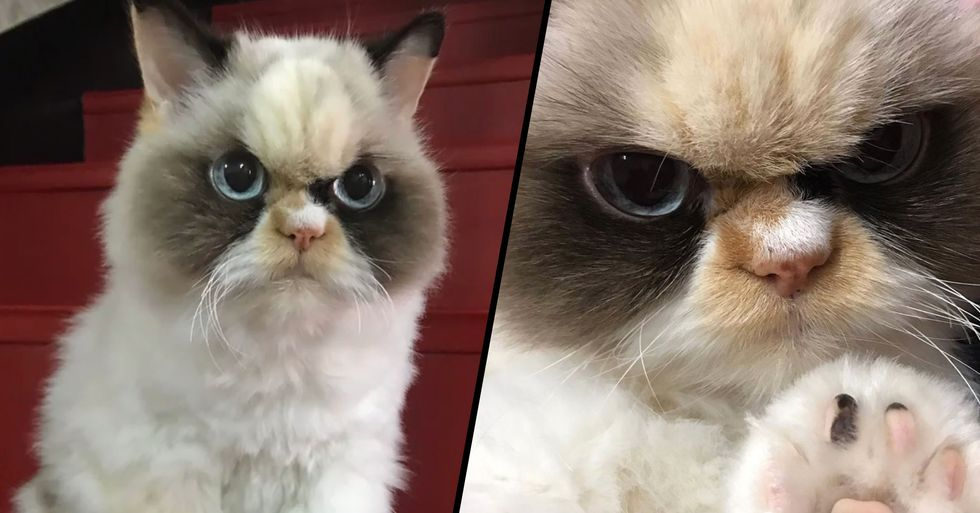A New 'Grumpy Cat' Has Emerged and She Looks Even Angrier Than the Last