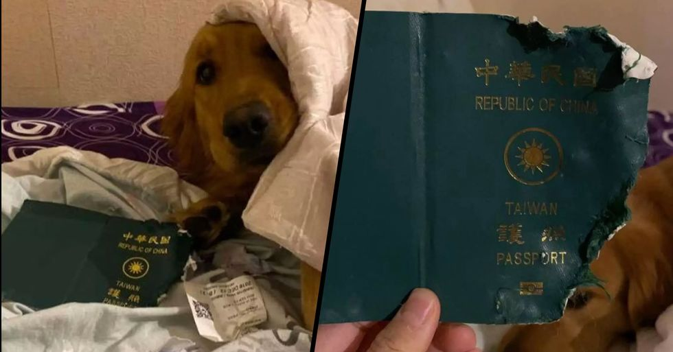 Dog Stopped Owner From Going to Coronavirus City Wuhan by Destroying Passport