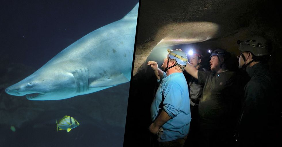 Head of Giant 330-Million-Year-Old Shark Found in Kentucky Cave Wall