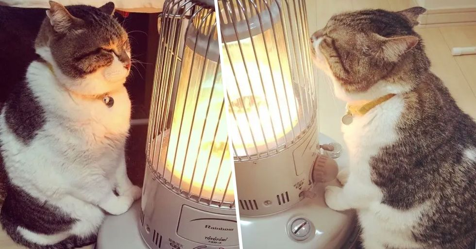 This Relationship Between a Cat and His Space Heater Is Everything