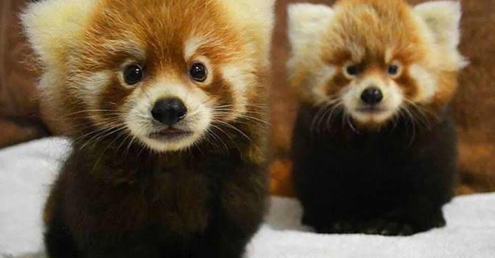 Absolutely Adorable Animal Photos That Made Us Squeal With Glee