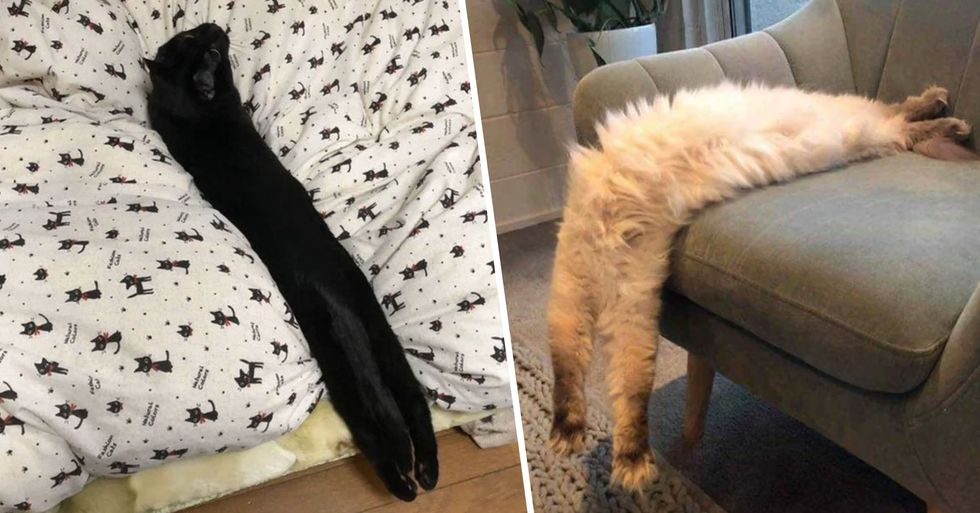 People Are Sharing Pics of Their Cats That Seem to Stretch to Infinity