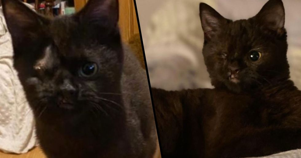 Ana the One-Eyed Cat Is Looking for a Forever Home