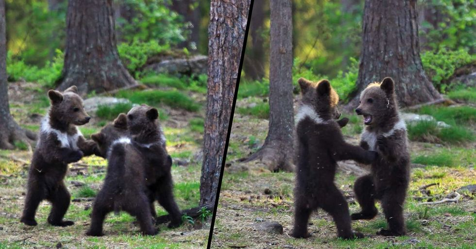 Teacher Stumbles Upon Baby Bears 'Dancing' in the Forest, Thinks He's Imagining It