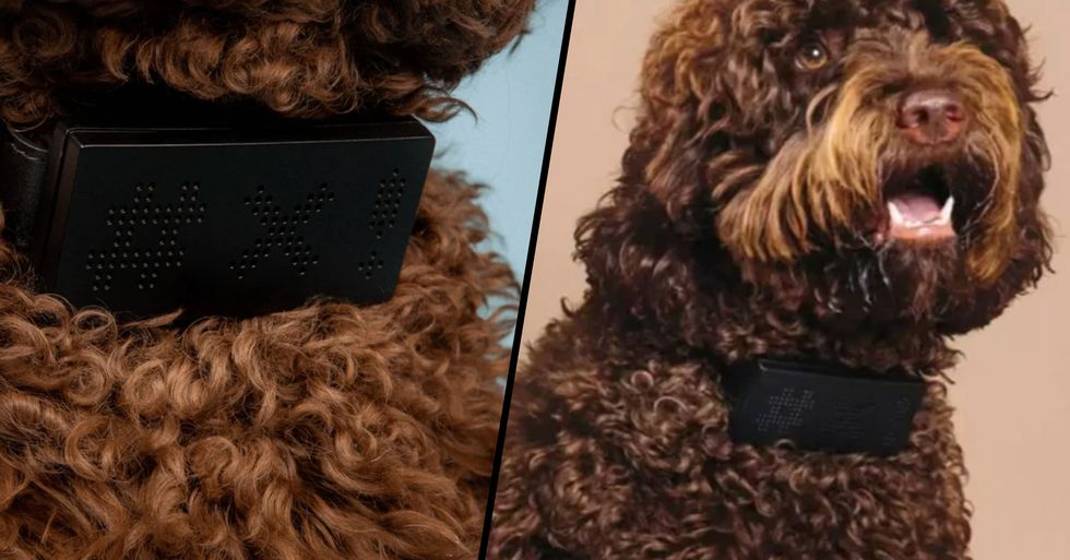Genius Dog Collar Translates Your Pets' Barks Into Curse Words