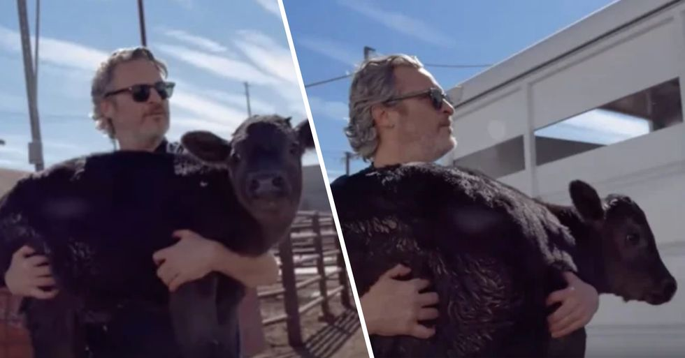 Joaquin Phoenix Saves Cow and Her Calf From Slaughterhouse After Oscars Speech