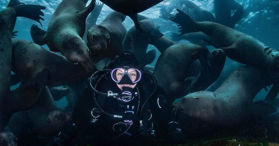A Group of Sea Lions Photobombed Diver's Selfie