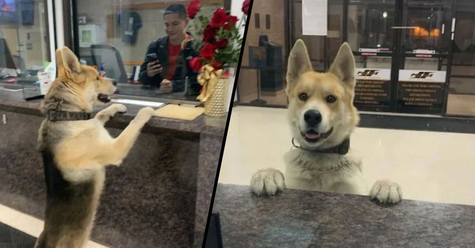 Dog Strolls Into Texan Police Station to Report Himself Missing