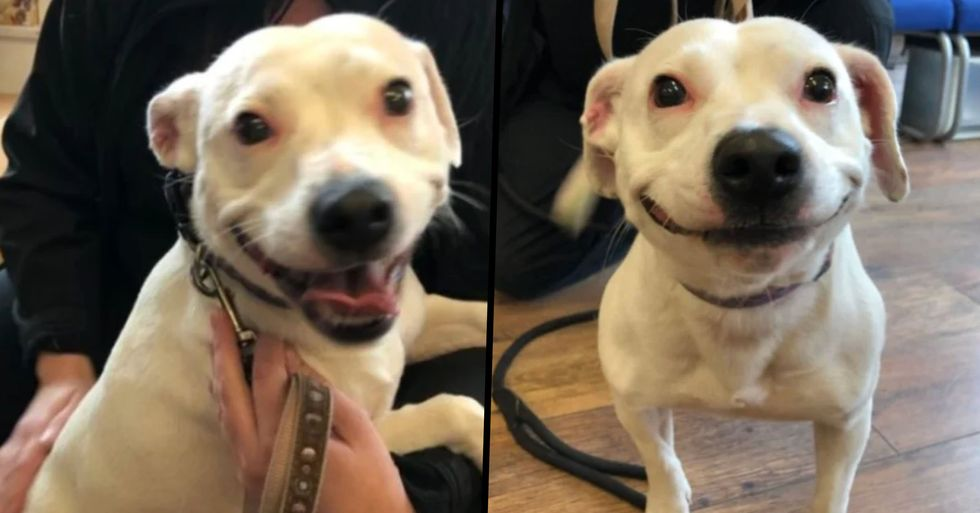 Stray Staffie With an Adorable Smile Finds Her Forever Home