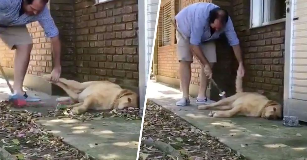 Guy Doing Chores Carefully Sweeps Around His Incredibly Lazy Dog Called Lazy