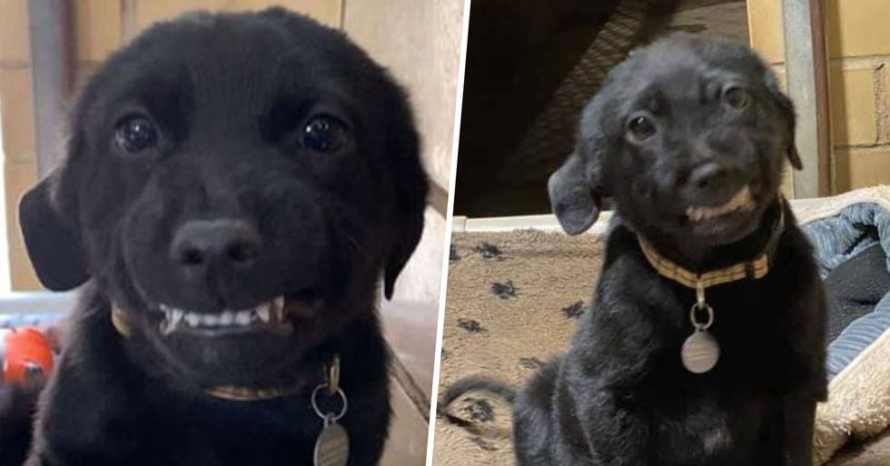 Smiling Pup Shows Teeth to Everyone at Dog Shelter Hoping to Find Forever Home
