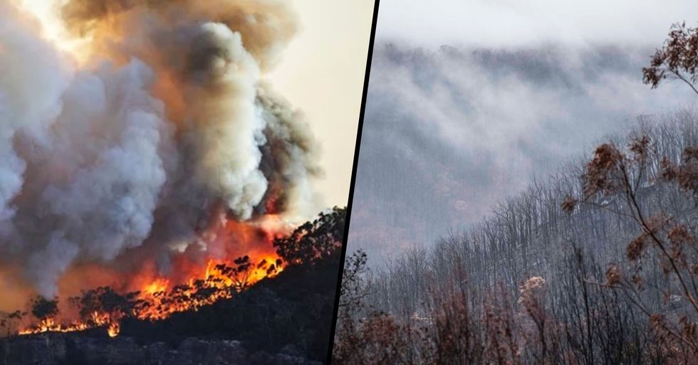 There Are No Active Bushfires in New South Wales for the First Time In 240 Days