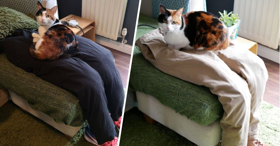 Couple Trick Super Clingy Cat Creating Fake Lap for Her to Sit On