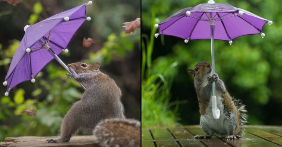 Photographer Has Captured Squirrel Battling Wind With Tiny Umbrella