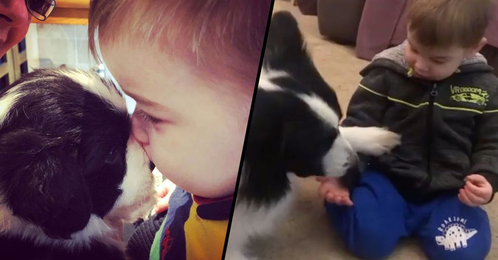Two-Year-Old Is so Close to His Pet Dog He Thinks They're Brothers