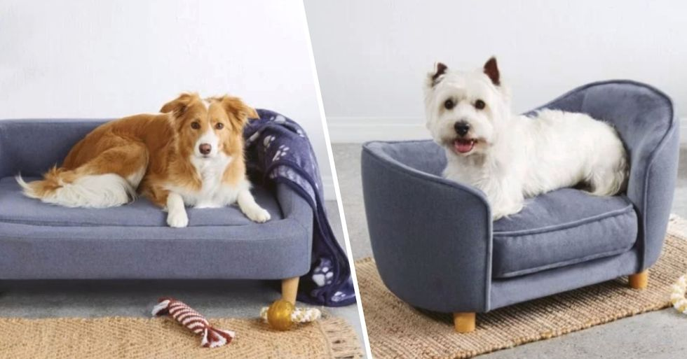 You Can Now Buy Tiny Sofas for Your Dog
