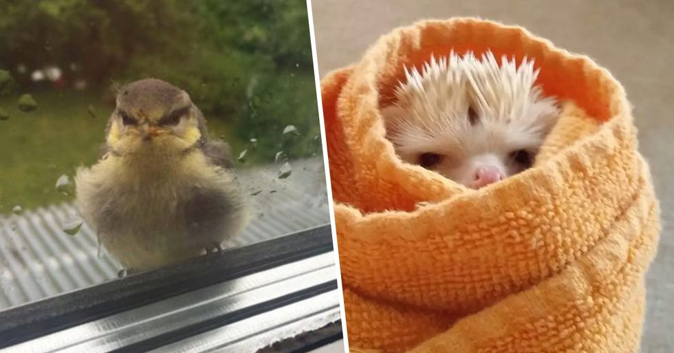 Here's a Whole Bunch of Tiny Animals Who Are Filled With Rage