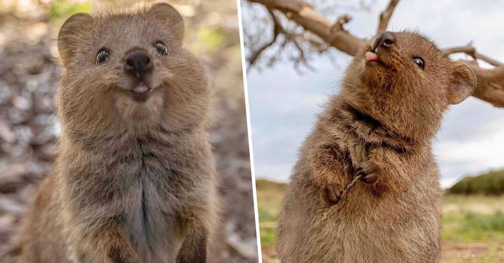 Quokkas Are so Cute We Can't Believe They're Actually Real