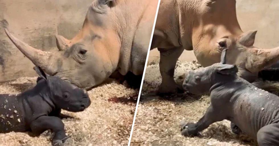 North Carolina Zoo Welcomes Its Fourth Baby White Rhino in 2 Years