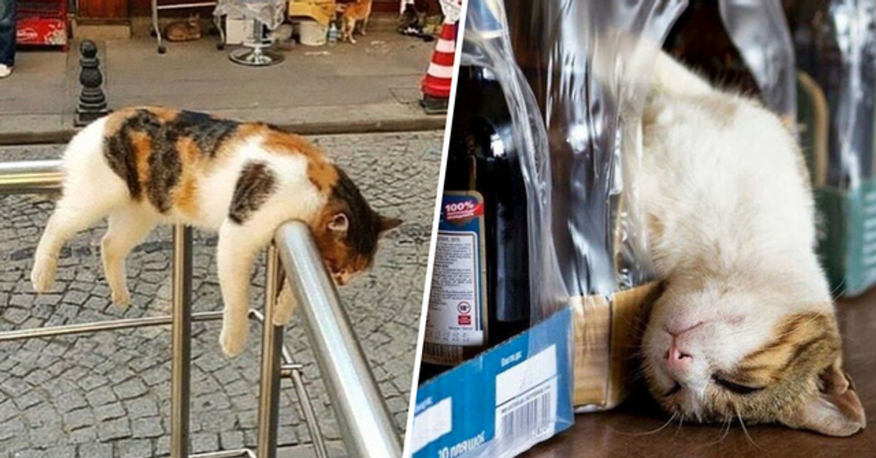 Pictures That Prove That Cats Can Sleep Just About Anywhere