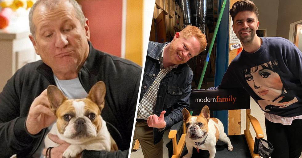 Dog Who Plays Stella in 'Modern Family' Has Died