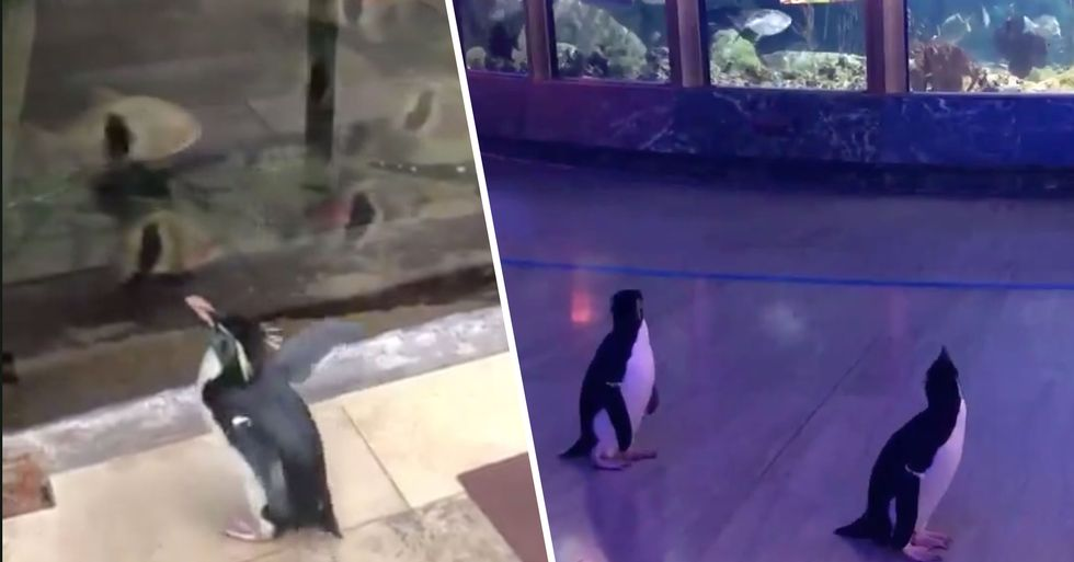 Penguins Were Allowed to Roam Around an Aquarium After It Was Closed Amid Coronavirus Lockdown