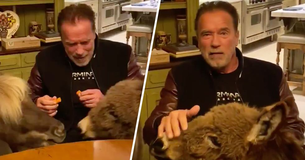Arnold Schwarzenegger Is Self-Isolating With His Tiny Pet Donkey and Horse