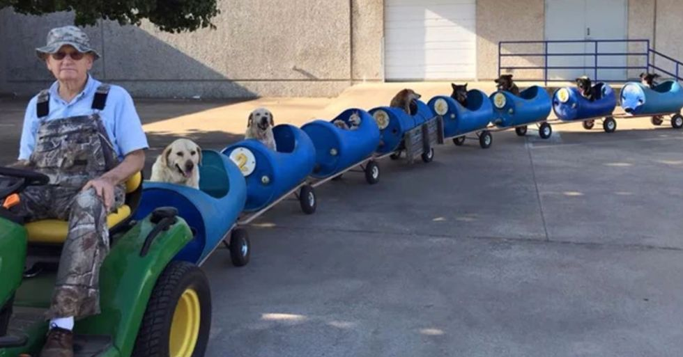 80-Year-Old Man Builds a Dog Train To Take Rescued Stray Dogs on Adventures