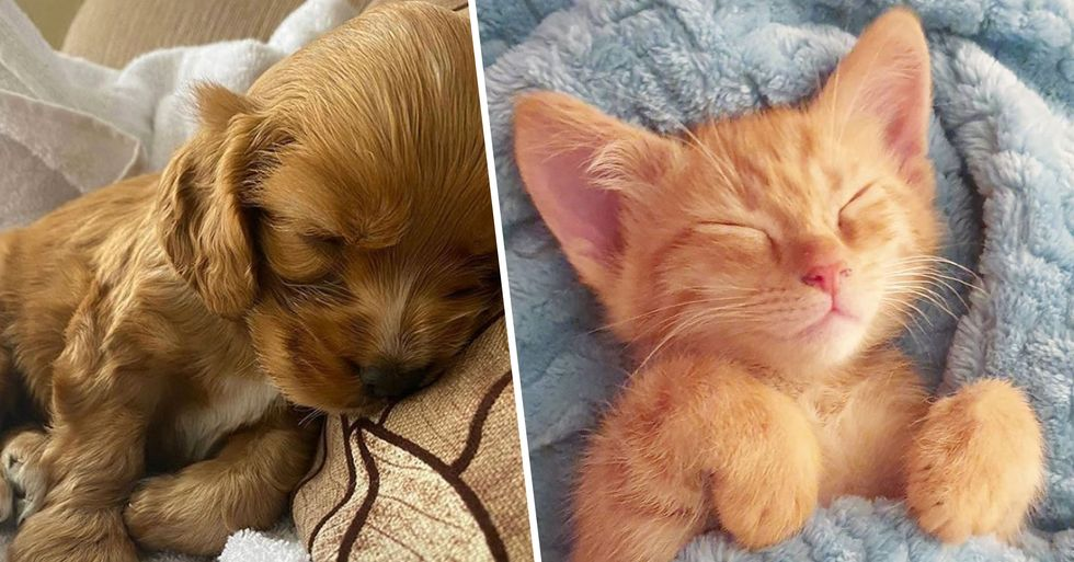 Animal Planet Plans to Air 94-Hour Marathon of Puppies and Kittens