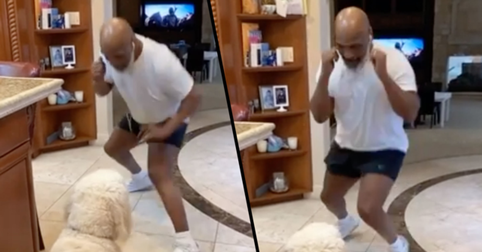 53-Year-Old Mike Tyson Shows Incredible Speed and Boxing Skills as He Spars With His Dog