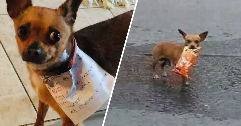 Man In Lockdown Sends Dog To Store To Get Bag Of Cheetos