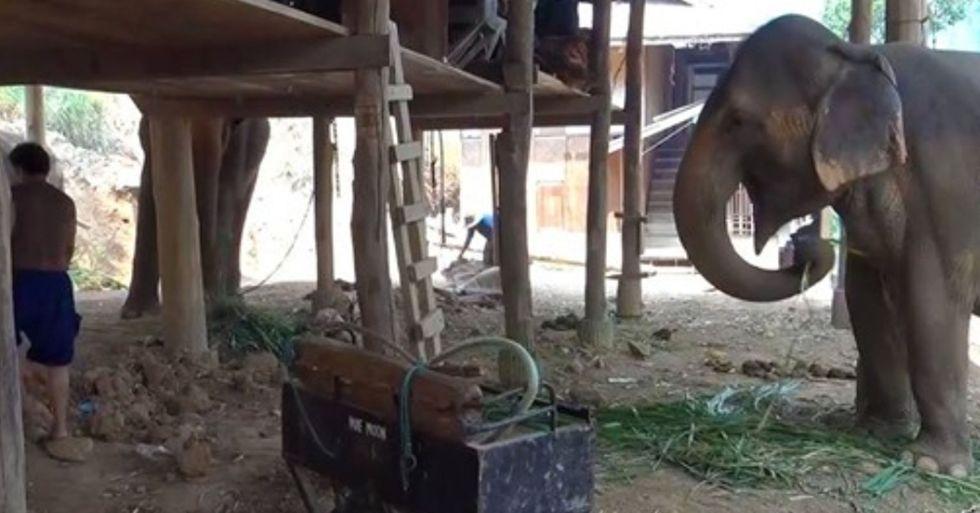 Dozens Of Elephants Set Free As Camp Closes to Public