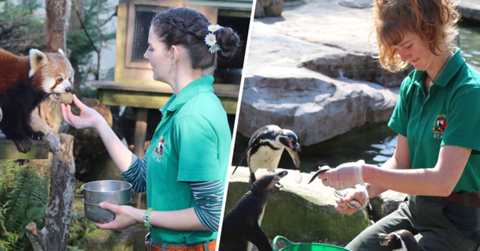 Zookeepers Move Into Wildlife Park for 12 Weeks to Self-Isolate With Animals