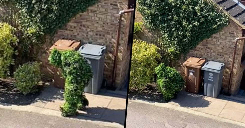 Man Caught Escaping Lockdown by Dressing as a Bush