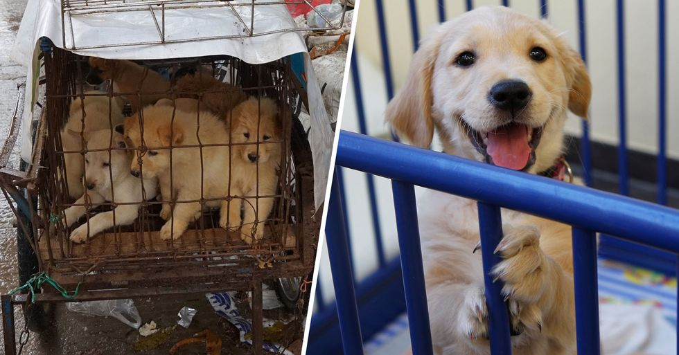Chinese City With 12.5 Million Residents Bans Dog and Cat Meat Trade
