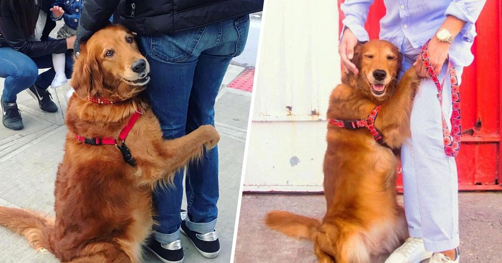 This Retriever Gives Hugs to Everyone She Meets