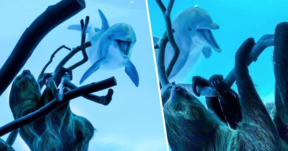 Dolphins Get Excited When a Sloth Is Placed Outside Their Enclosure
