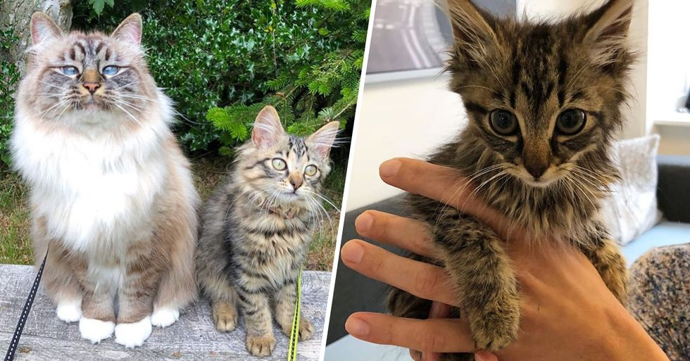 Man Went for Walk With His Cat and Came Home With a Kitten They Rescued