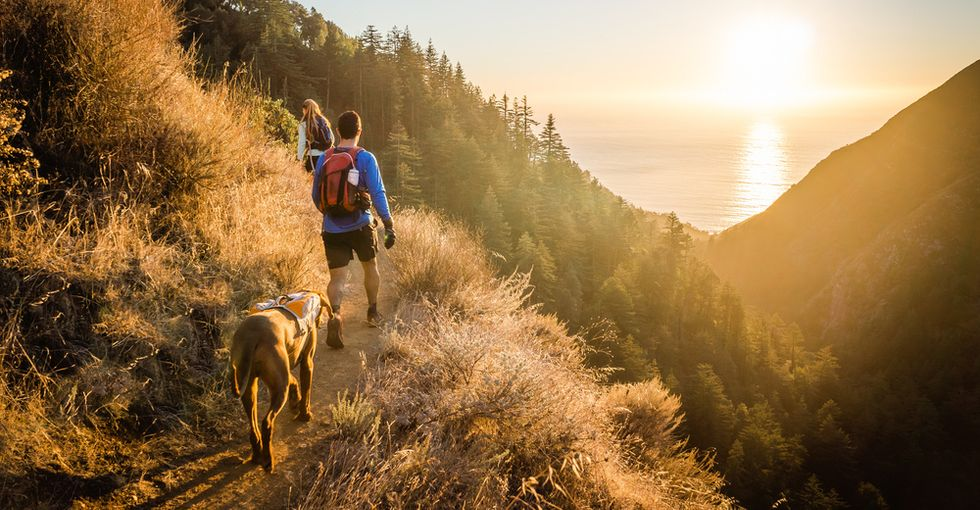 The Essential Starter Pack for Hiking and Backpacking With Your Dog in 2020