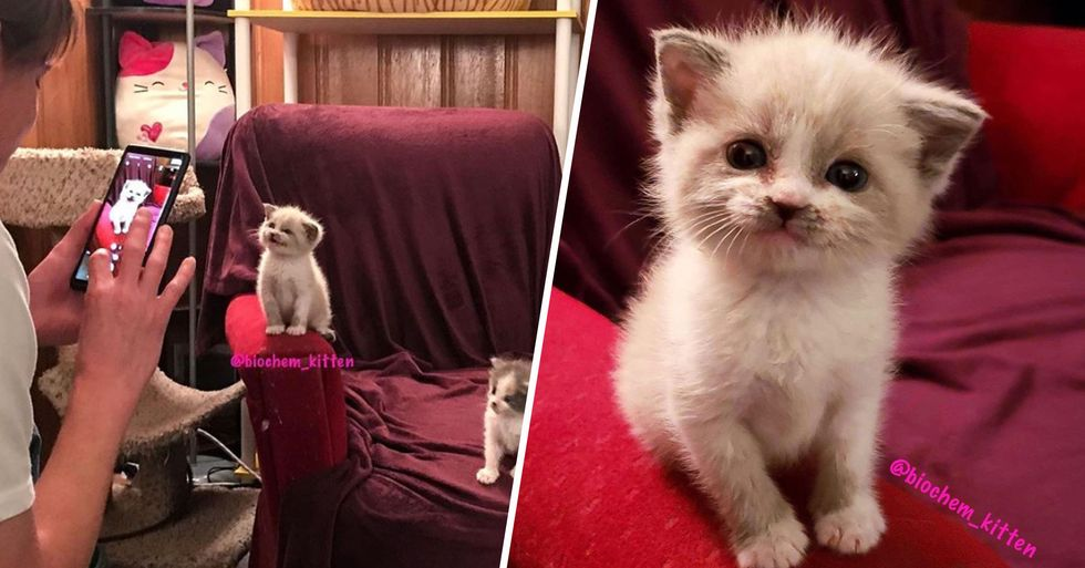 Foster Kitten Gives the Most Adorable Smile During a Photoshoot