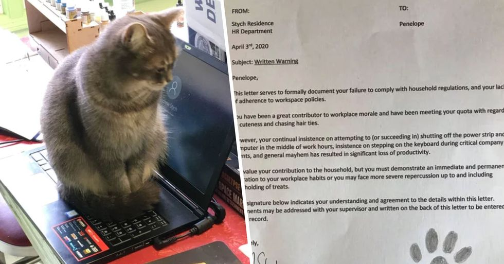 A Man Filed an HR Complaint Against His Cat While Working From Home
