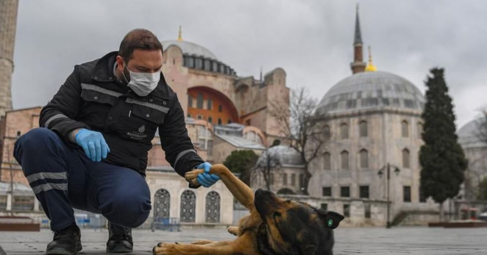 Officials in Turkey Are Leaving Food out for Stray Animals During Lockdown