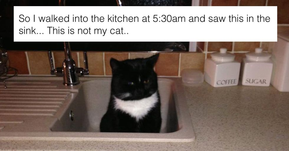 People Are Sharing Their 'I Don't Own a Cat' Moments and They're Hilarious