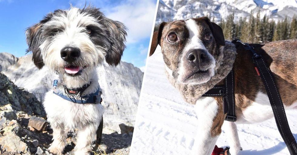 This Photographer Is Making Online Dating Profiles for Adoptable Dogs and It's Working
