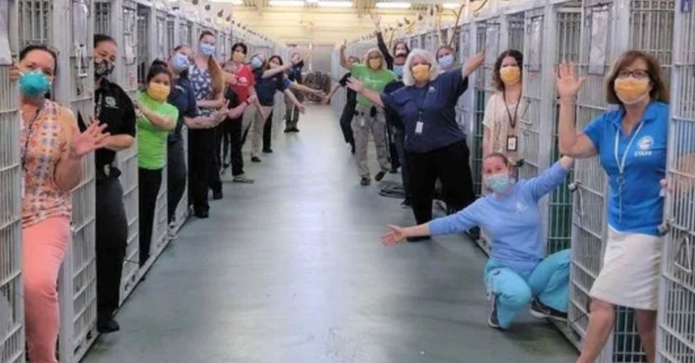 Staff at Animal Shelter Celebrate Having an Empty Kennel