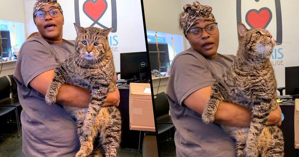 'The World's Chonkiest Cat' Is Looking for a Family to Love and Adopt Him