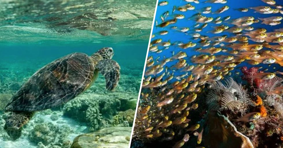Coral Reefs and Marine Animals in Hawaii Are Thriving With Humans at Home